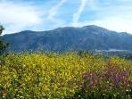 View to La Maroma