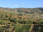 View from Terrace of Vineyards and valley