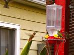 Back Garden is a buzz with Hummingbird shananagans