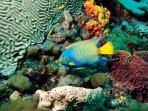 Things to do - The Buccoo Reef