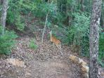Wildlife seen from our porch includes deer, bear, turkey, hawks, squirrels, woodpeckers, butterflies