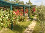 Garden detail at Casa do Lago