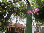 We love gardening in the tropical climate of Bali. Orchids is one of our favorites.