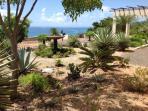 Rooftop Desert Tropical Gardens