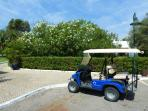 Golf Cars to Rent