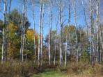 Autumn view of the walking trails
