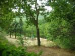 Peaceful lakeside picnic area