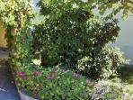 Garden (200 square meters)