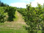 Julian Is well known for its apple orchards and apple pies.