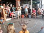 Hermit crab races-a fun activity!!!!