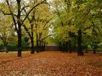 Jardim Botânico (outono)