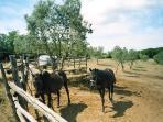 LA FRANCESCANA is also a cattle, donkey and horse breeding farm.