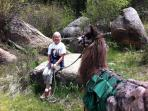 Llama Hike