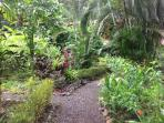 Meandering paths provide views of lush tropical plantings provide beauty and wildlife habitat.