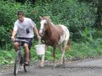 A local man leads his horse home from the day's grazing spot.