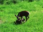 Twin Fawns Greeted us the first day we visited this Vacation