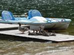 Ducks Sunning Themselves on Dock