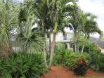 There are palm trees and tropical flowers all around patio