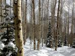 Centenial Woods at Deer Valley after a fall of fresh Powder. Yum!