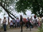 Quepos Horse Festival
