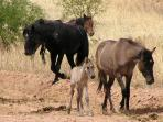 Love animals?  See wild horses in the nearby desert wash.