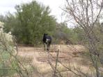 Wild horses - in desert