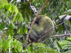 This picture of a 3 toed sloth was taken right from the deck of this home