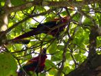 If you keep your eyes peeled, you will see scarlet macaws, parrots, and toucans from the home