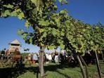 Rustic Wine Tavern
