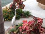 Resident Egret