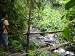 Trekking in local rainforest and rice-paddies