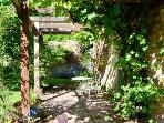 Patio covered by vine