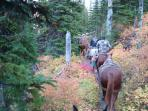 Fall Elk Hunt West of Great Falls