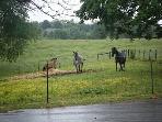 3 horses running in pasture