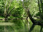 Buffalo River Adjoins Property