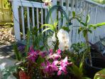 I collect orchids!