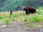 Wildlife on Alaska Hwy to Haines Junction