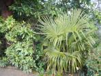 Palm Tree in Victoria!