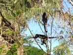 monkeys move around depending on food supply