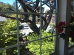 Living room window overlooking frontyard