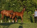 our mare Altezza Reale and her colt