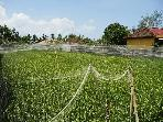 Situated besides a stunning boutique rice field.