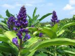 One acre of Hawaii's splendor