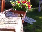 Horseflies are common guests