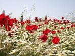 Spring flowers on Lesvos