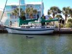 dolphin in canal