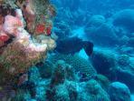 A lot of good scuba spots on the island ( 10 - 40 min)