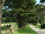 Private tree lined drive leading to the properties