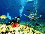 Enjoy Scuba Diving and Snorkeling