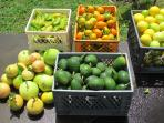 Stroll the orchard with fresh island fruit.